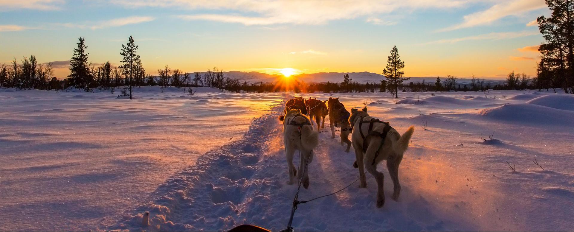 Voyage à la neige : Québec : aventure en traîneau à chiens