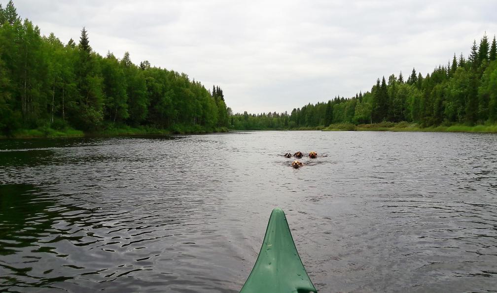 Image Concentré d'activités en laponie suédoise