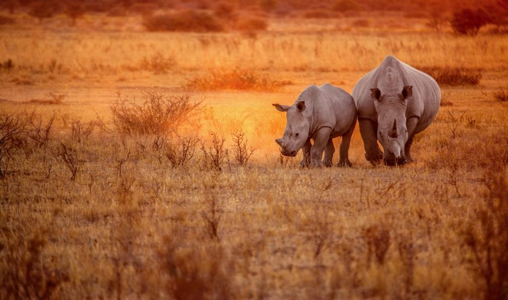 Image Safaris en tanzanie, parcs du nord et lac natron