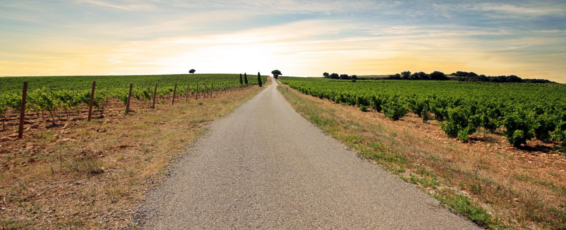 Voyage en véhicule France : Les grands crus des côtes du rhône à vélo
