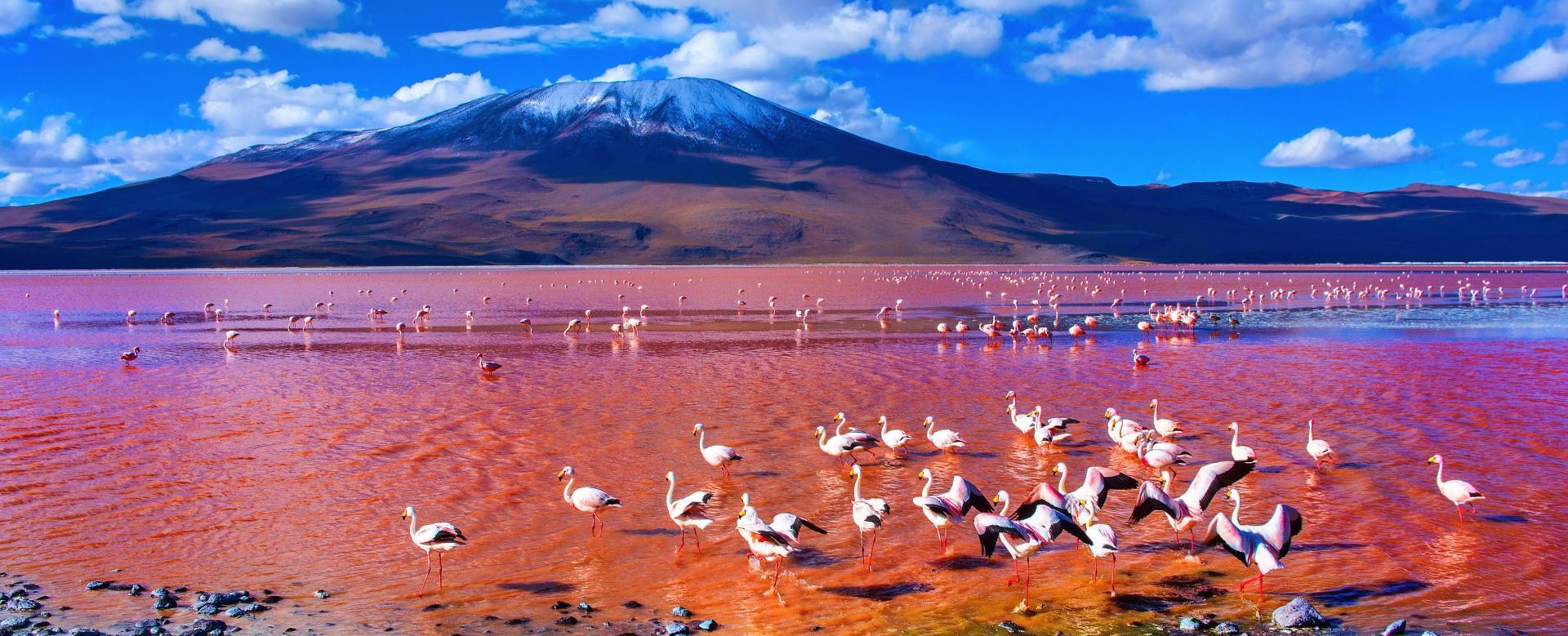 Voyage à pied : Bolivie : Machu picchu, salar d'uyuni et lac titicaca