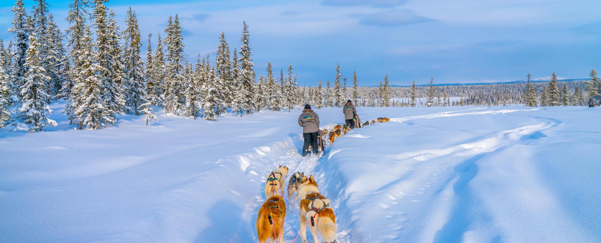 Voyage à la neige : Entre chiens et loups au québec