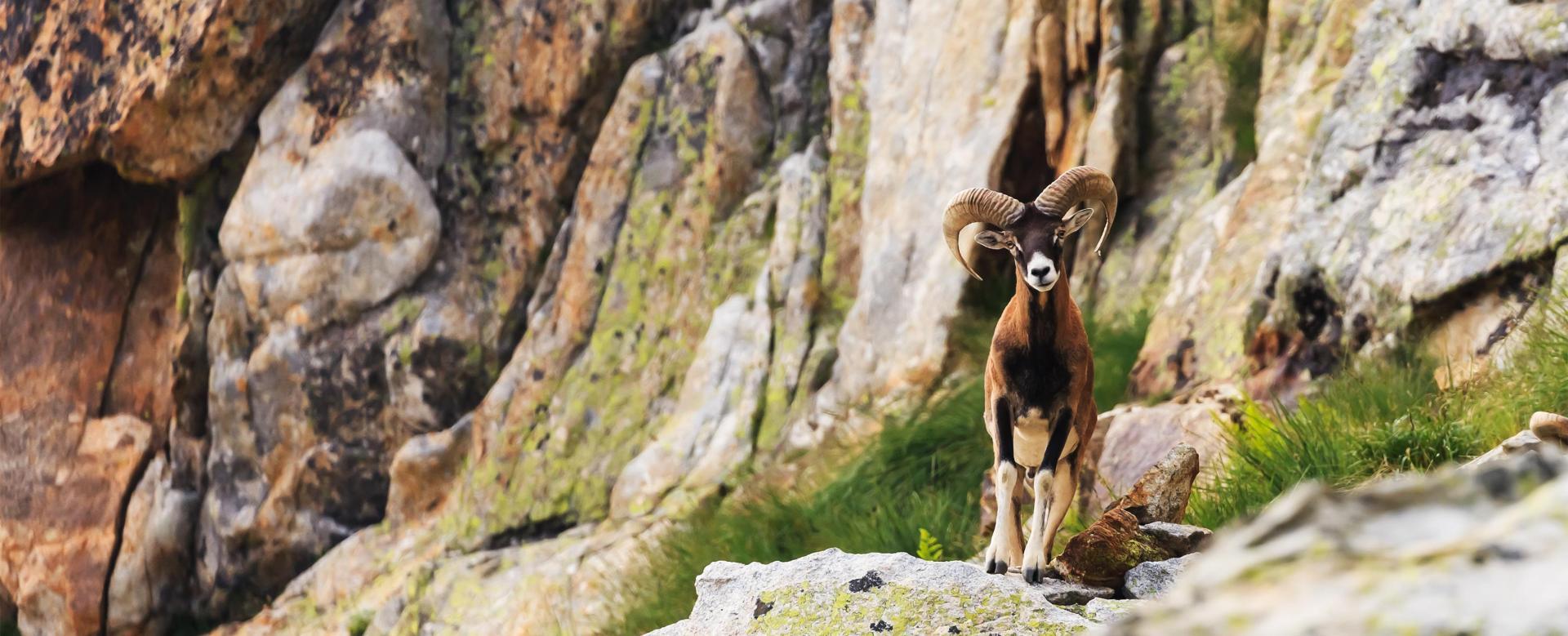 Voyage avec des animaux France : Lacs, ânes et loups dans le mercantour