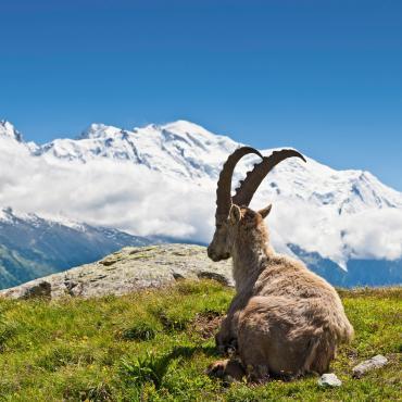Le tour du Mont-Blanc en 6 jours