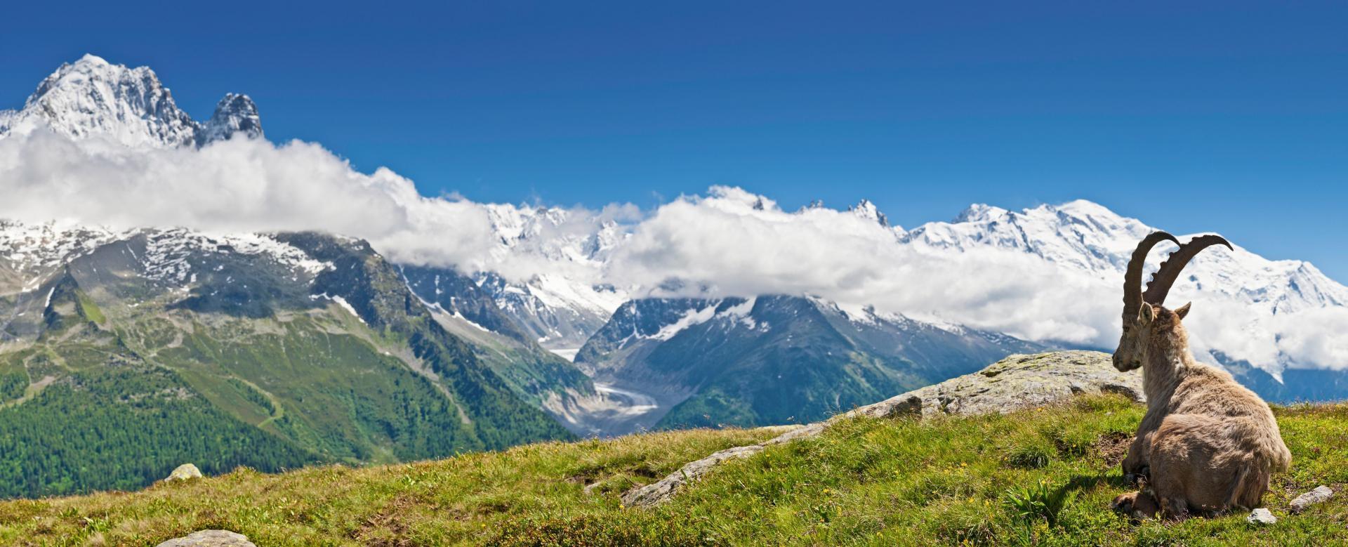 Voyage à pied : Le tour du mont-blanc en 6 jours