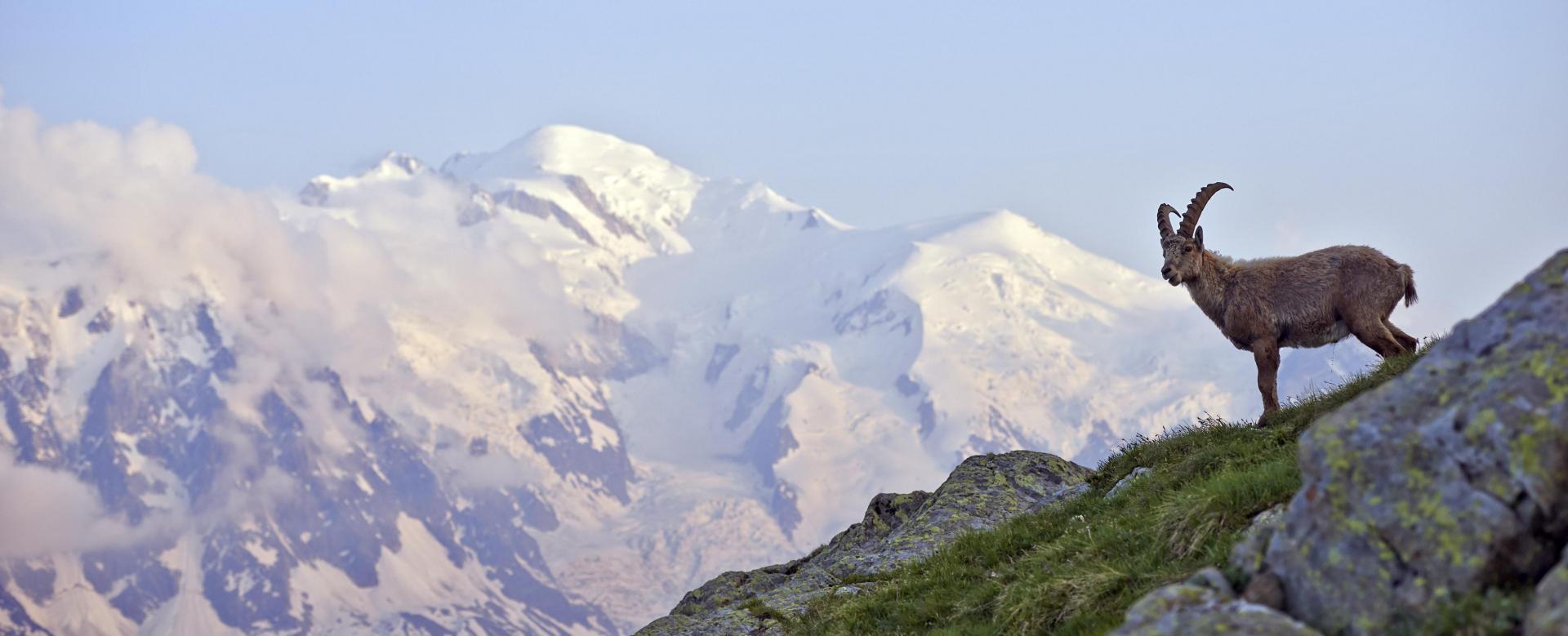Voyage à pied : Le grand tour du mont-blanc