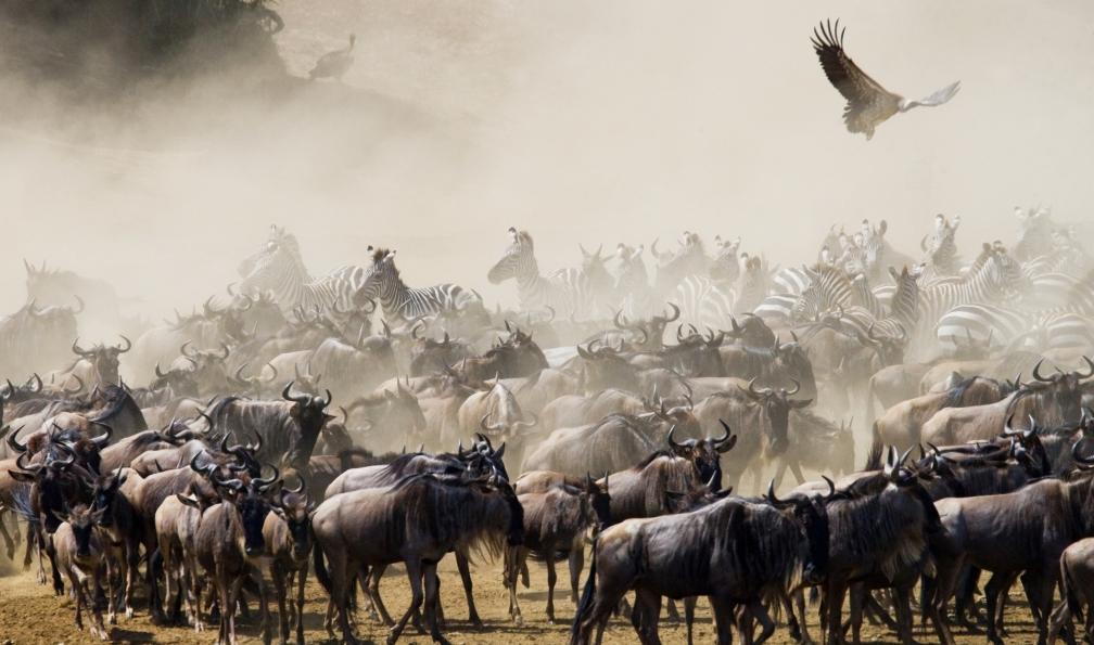 Image Masai mara et safaris kenyans en lodge