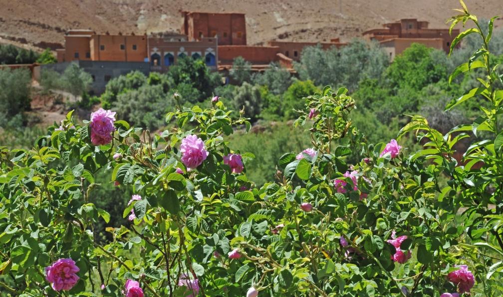Image La vallée des roses