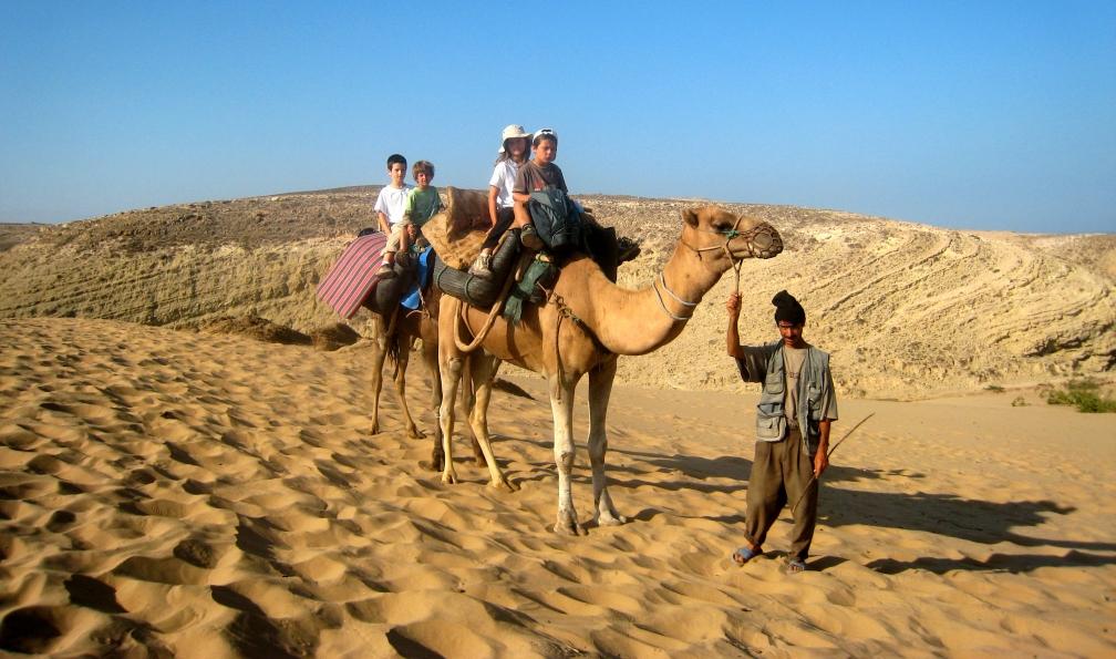 Image Les chameaux de l'atlantique