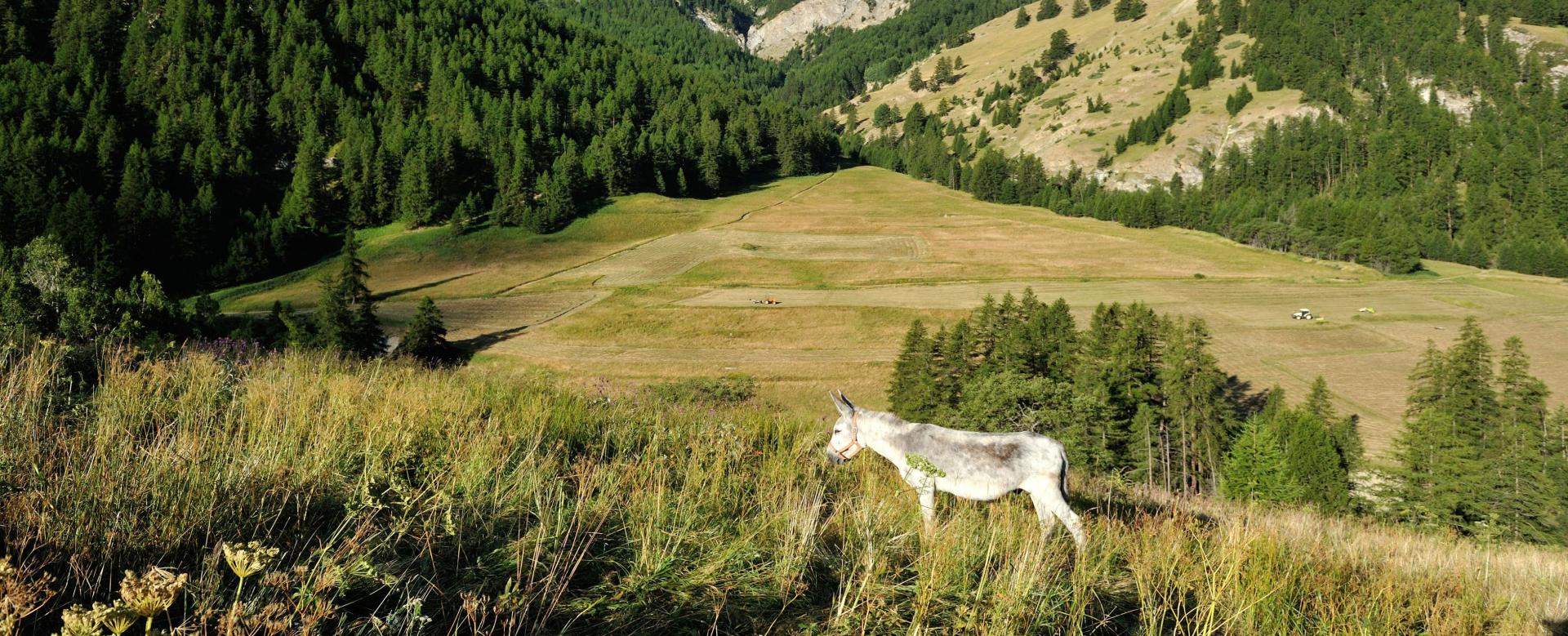 Voyage à pied : Queyras, au pas de l\'âne