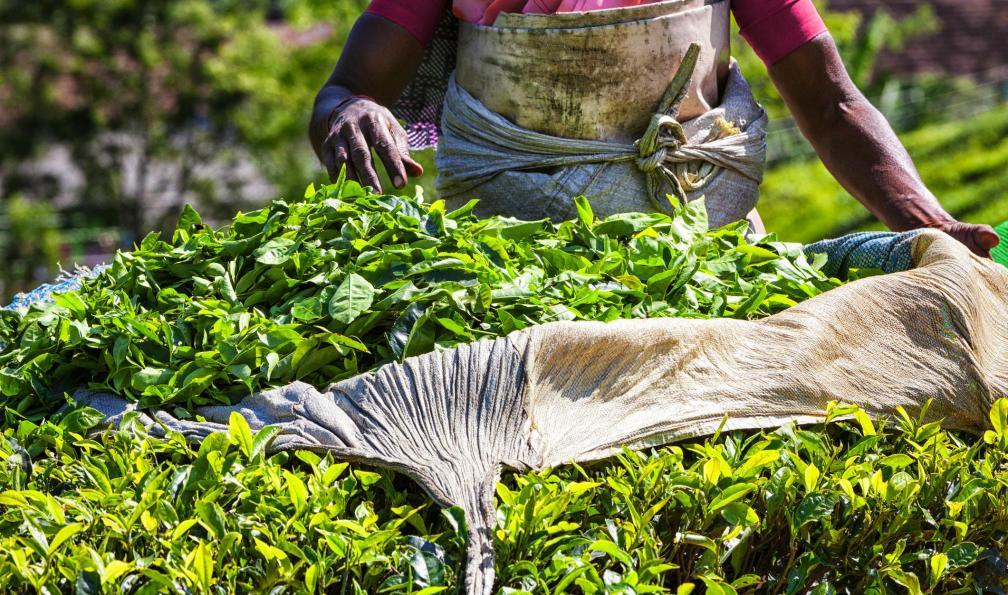 Image Douceur de l'inde du sud, de pondichéry à cochin