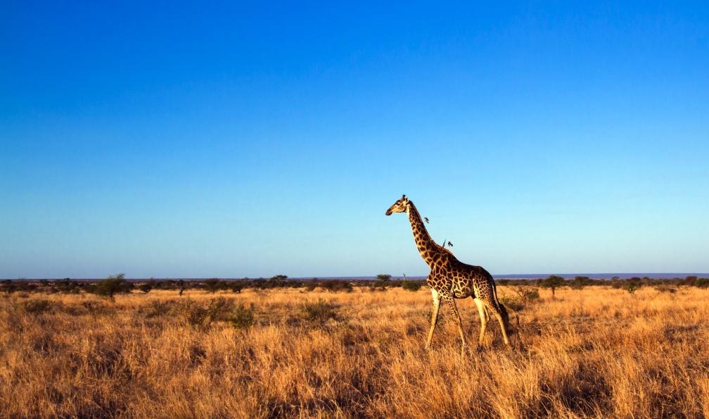 Image Incontournable afrique du sud