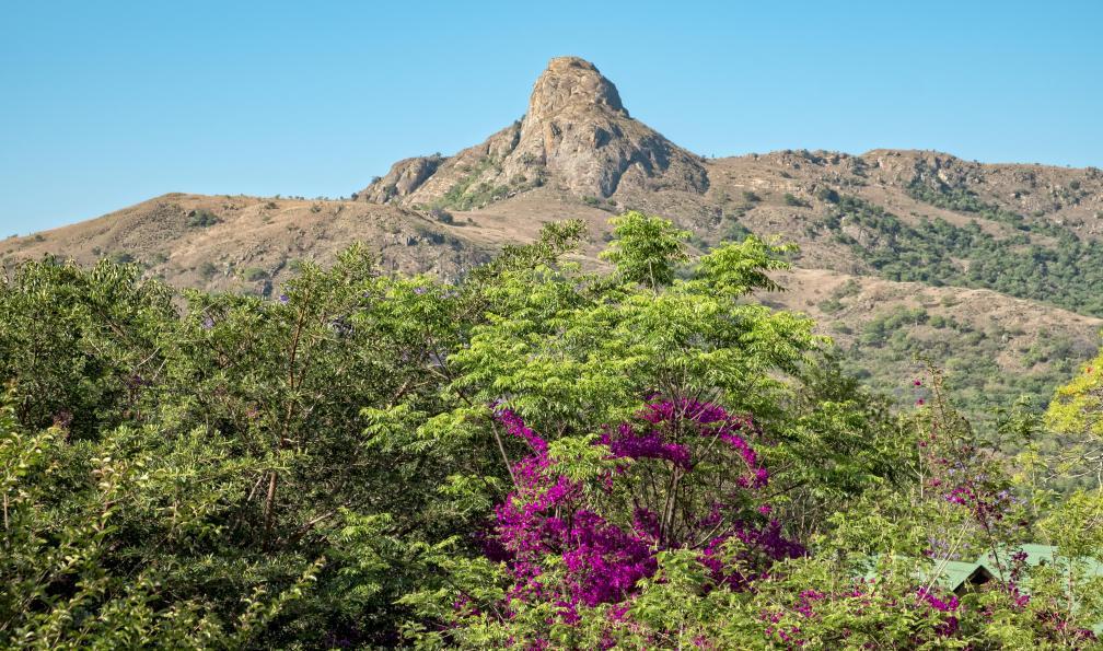 Image Sommets du cap, savane et tropiques