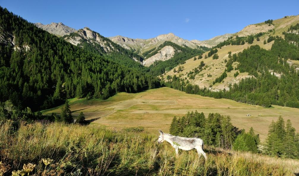 Image Le tour du queyras du coq à l'âne