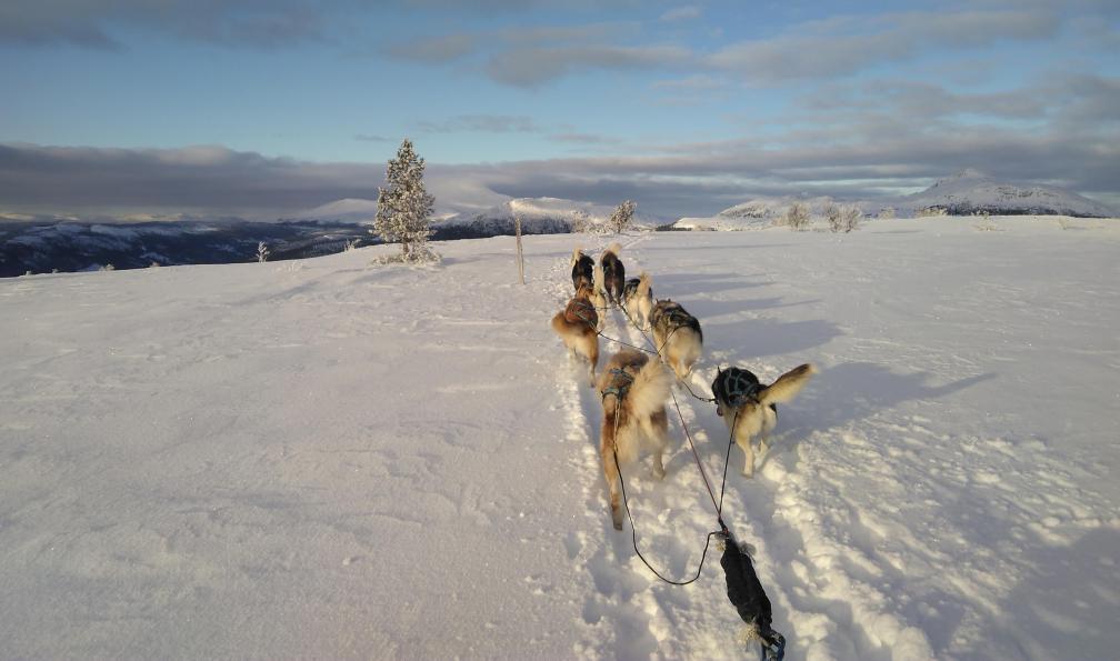 Image La norvège en traîneau