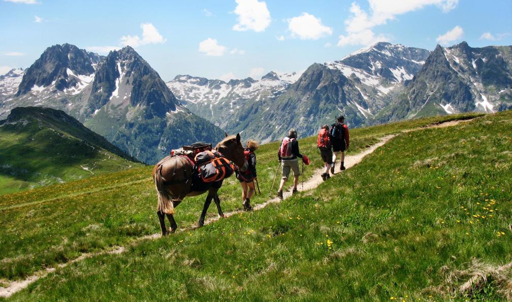 Image Le tour du mont-blanc avec une mule