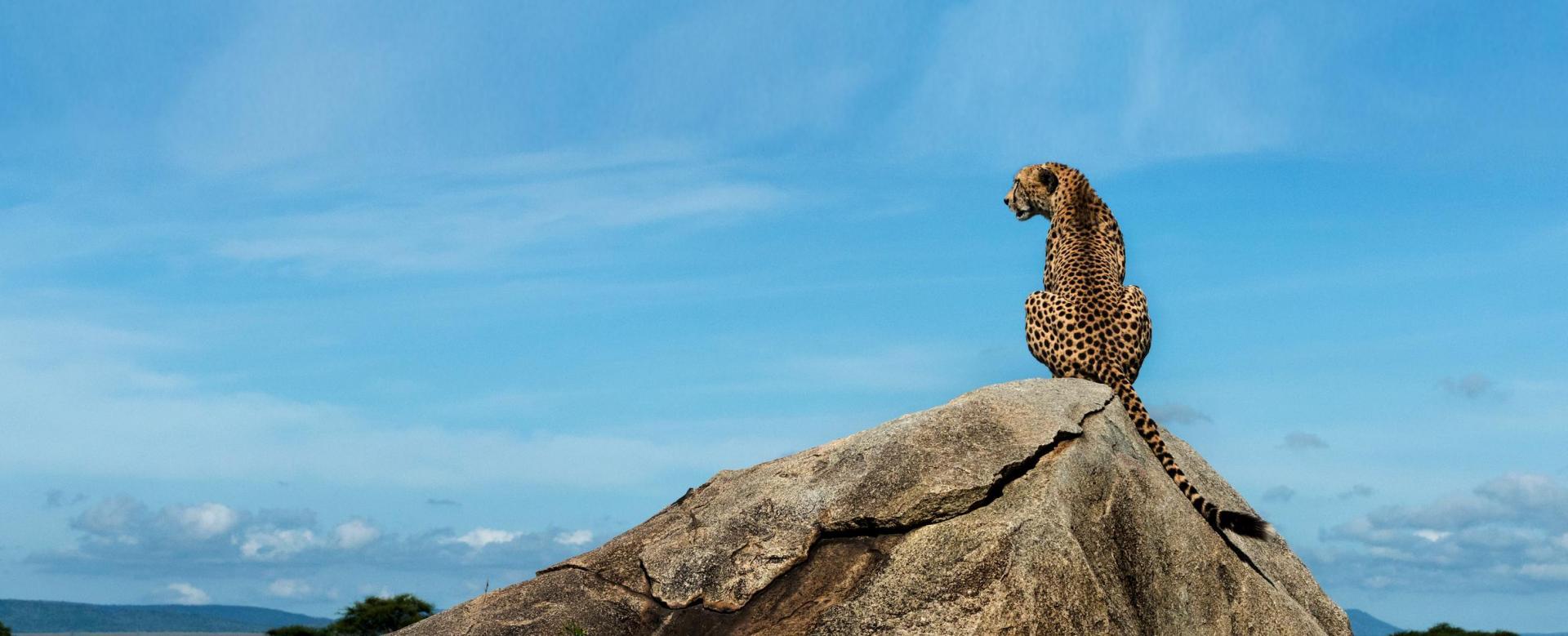 Voyage à pied : Kili machame et grands safaris