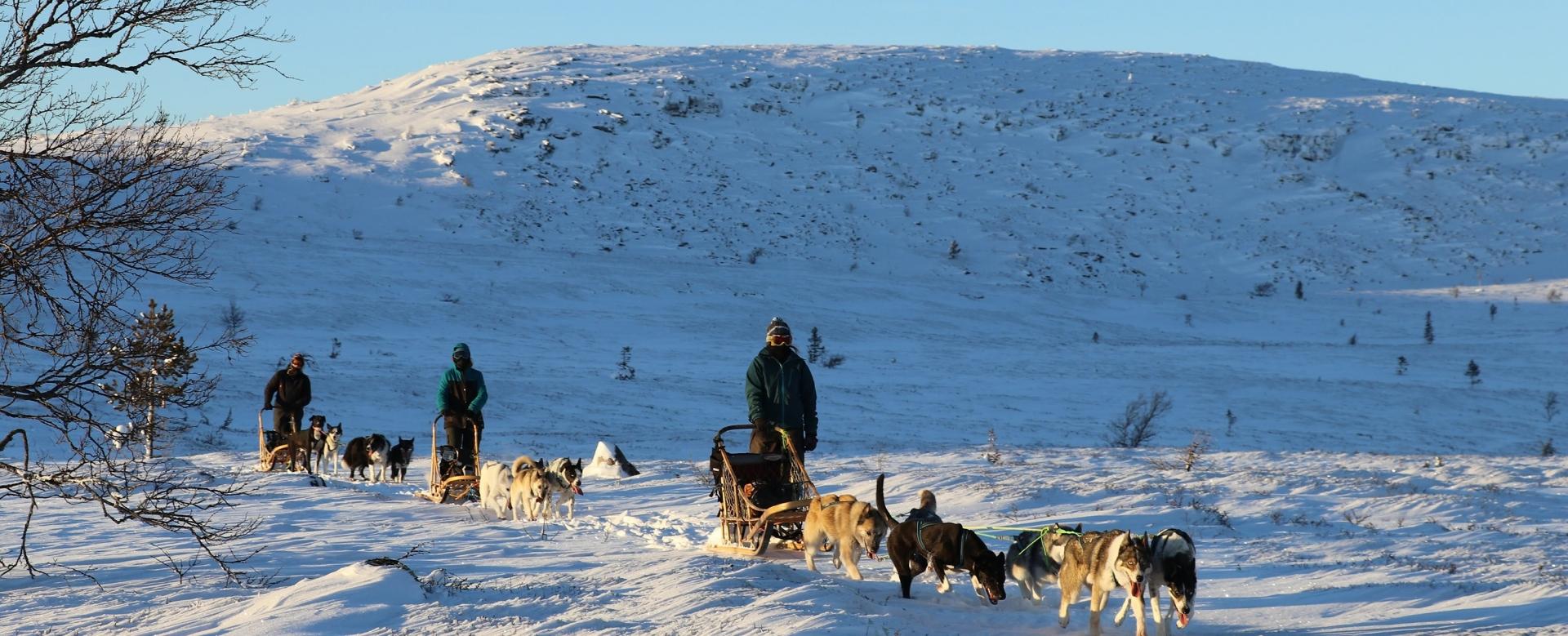Voyage à pied : La norvège en traîneau