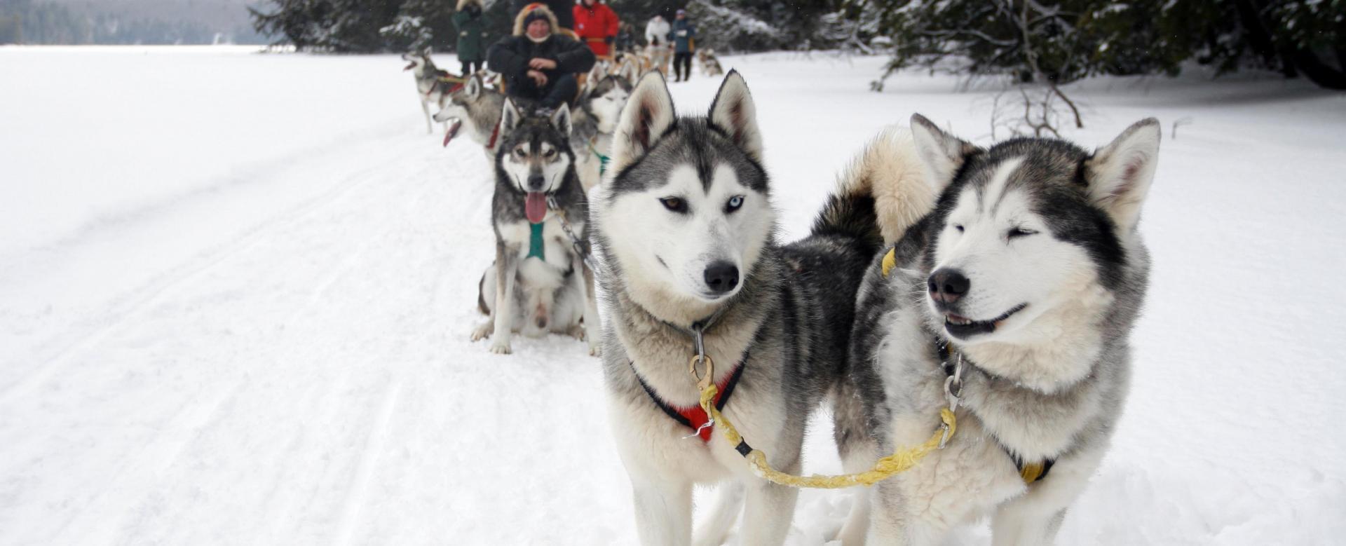 Voyage à pied : Québec : Entre chiens et loups au  qu\'bec