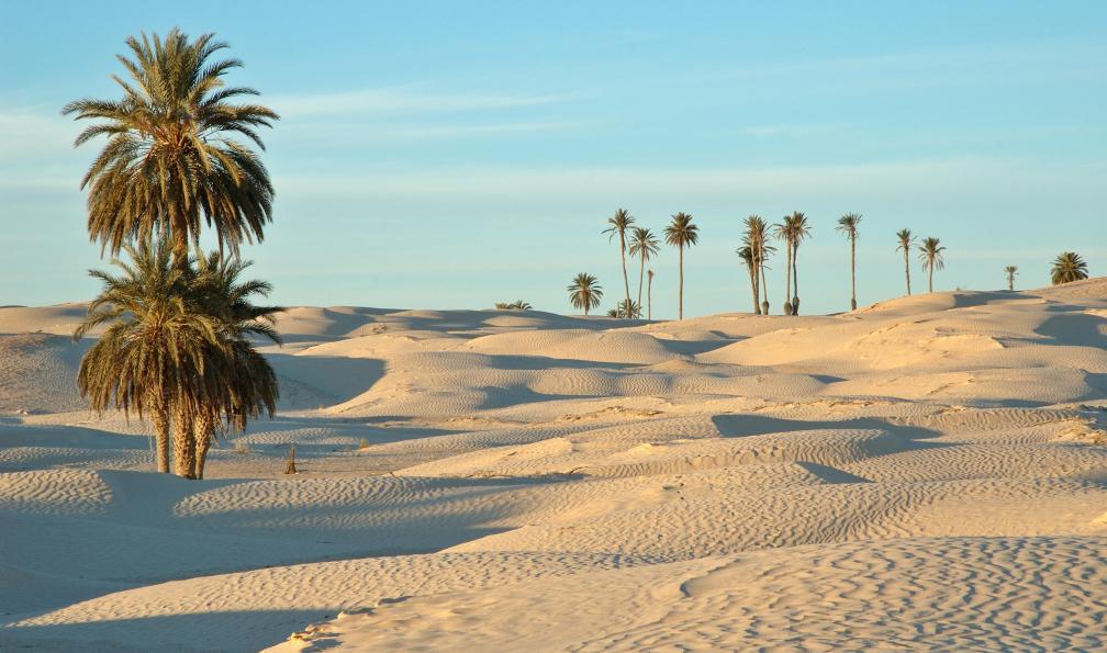 Image Sables et oasis du sud