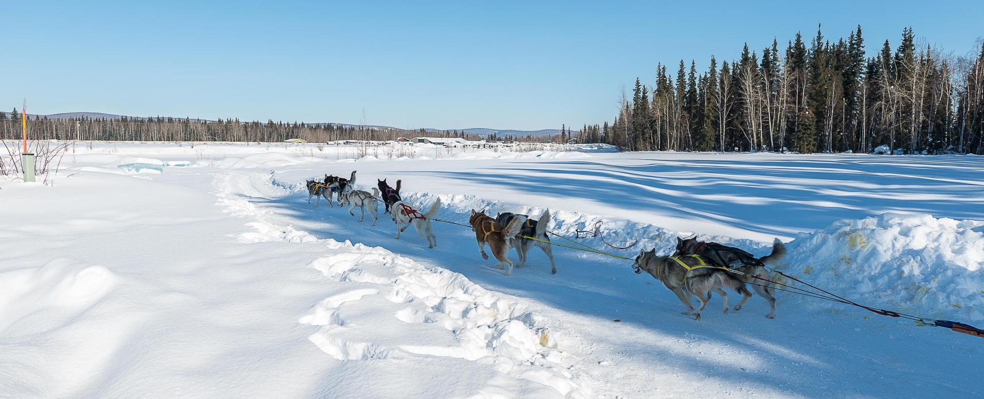 Voyage à pied : Québec : aventure en traîneau à chiens