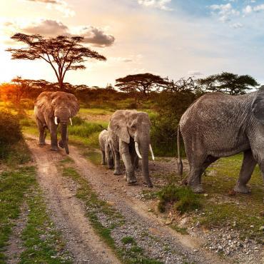 Bush tanzanien et vallée du Rift