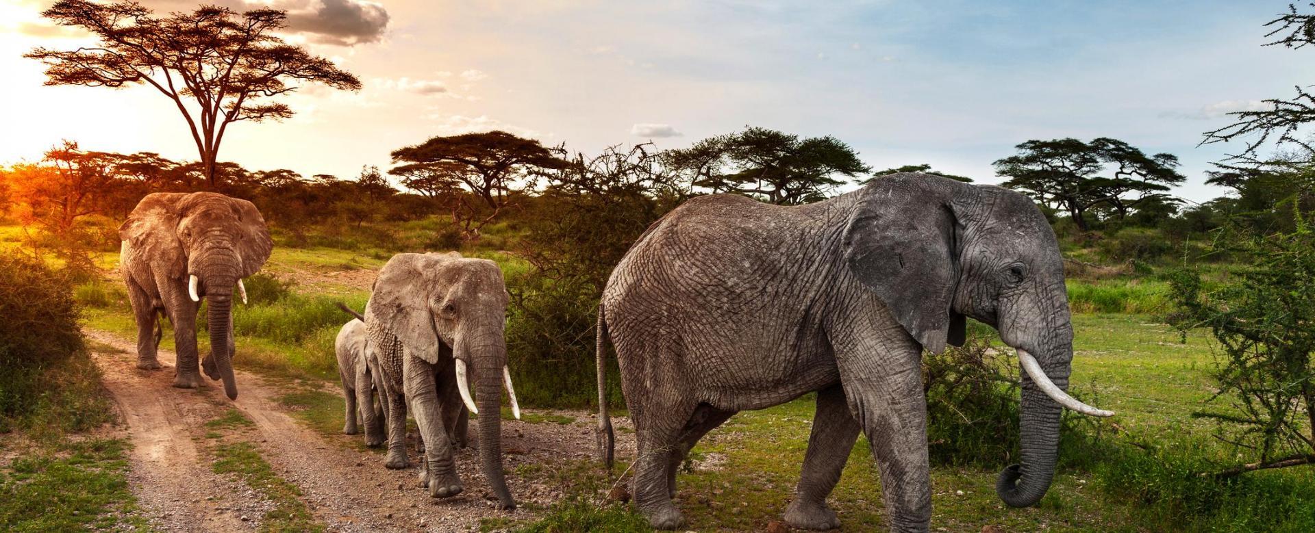 Voyage avec des animaux Tanzanie : Bush tanzanien et vallée du rift