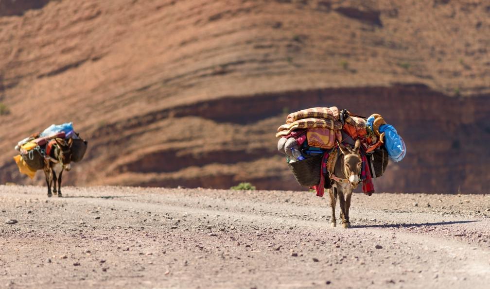 Image A la rencontre des berbères