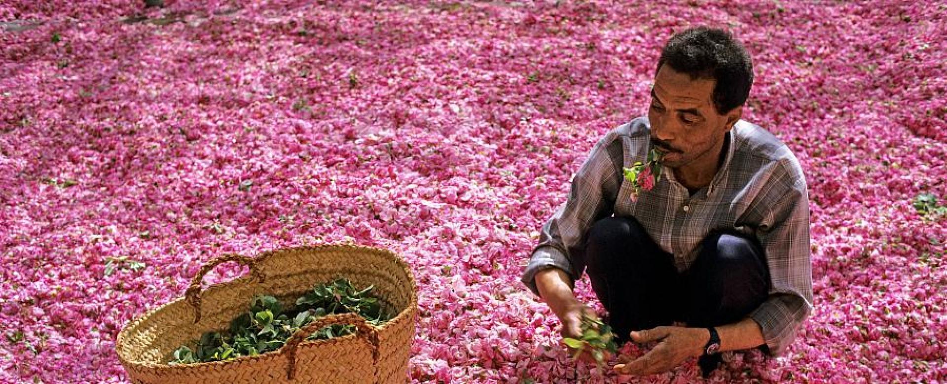 Voyage à pied : Maroc : Les roses du m\'goun - ouarzazate
