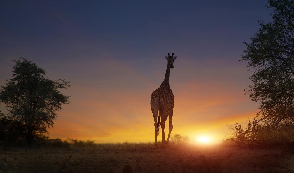 Image L'afrique arc-en-ciel