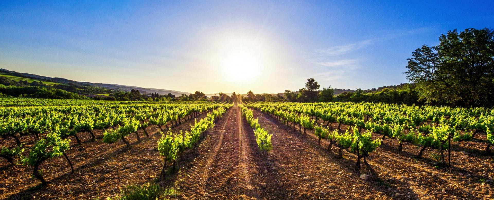 Voyage en véhicule : Les vignobles de la rioja à vélo