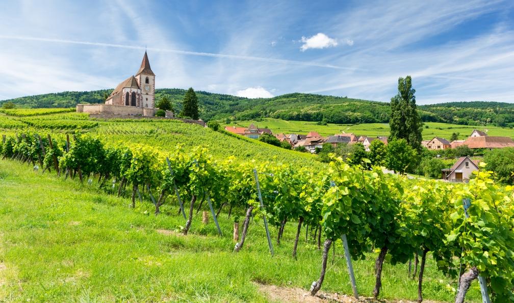 Image La route des vins d'alsace à vélo