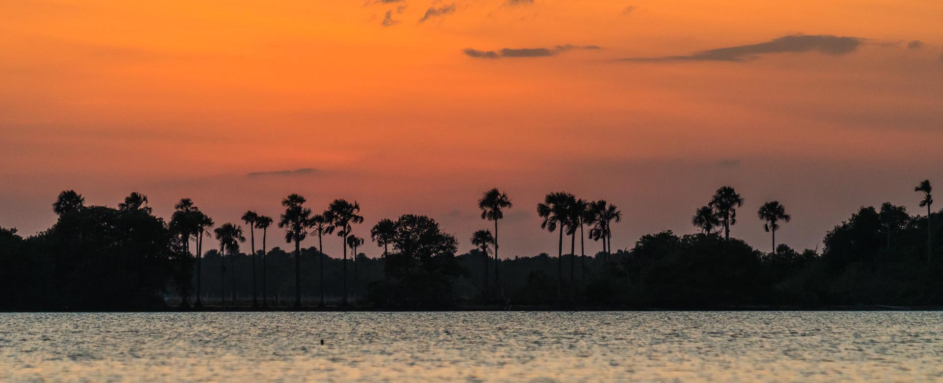 Voyage sur l'eau : Llanos, la région du café et carthagène