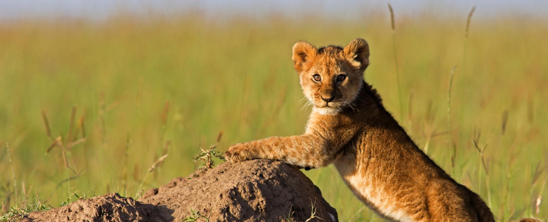 Voyage avec des animaux : Tanzanie : Au pays de simba