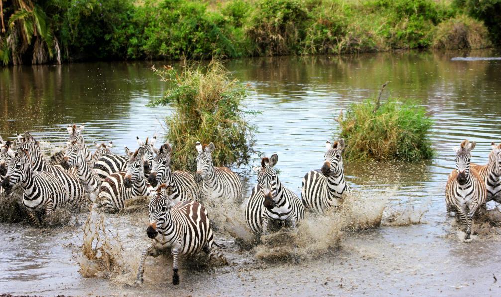 Image Kalahari, okavango et zambèze