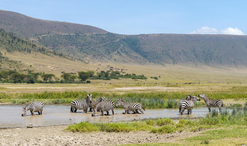 Image Des grands parcs aux plages de zanzibar