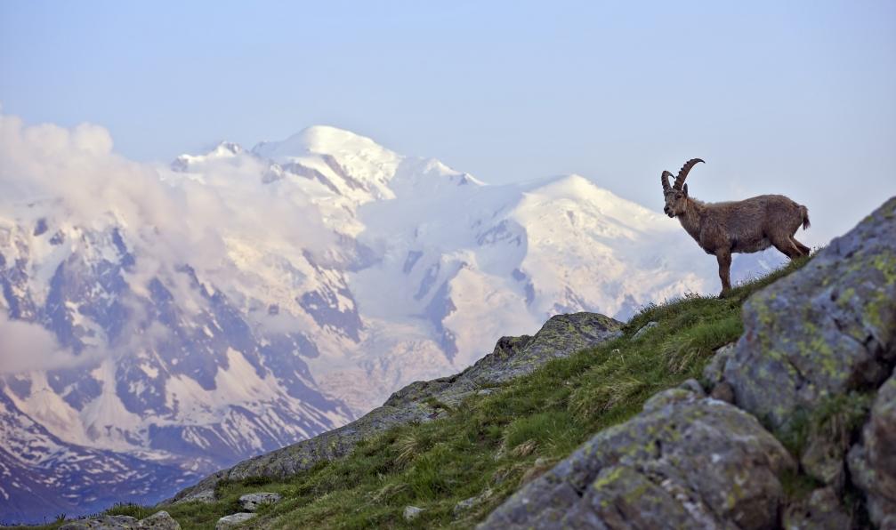 Image Tour du mont-blanc en liberté sur mesure