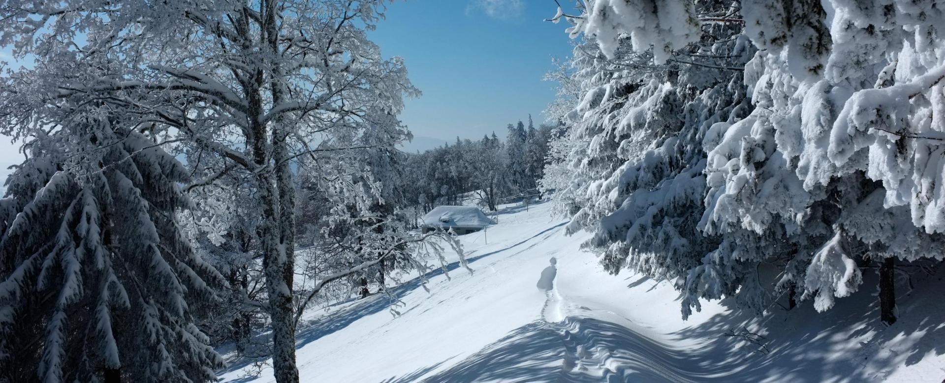 Voyage à la neige : Traversée des crêtes du haut jura