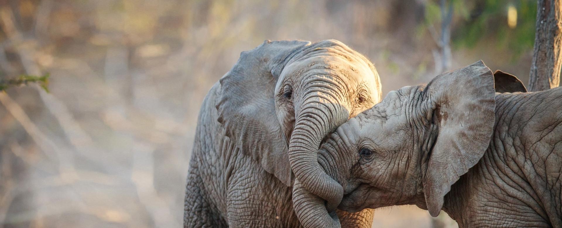 Voyage à pied : L\'olifant trail
