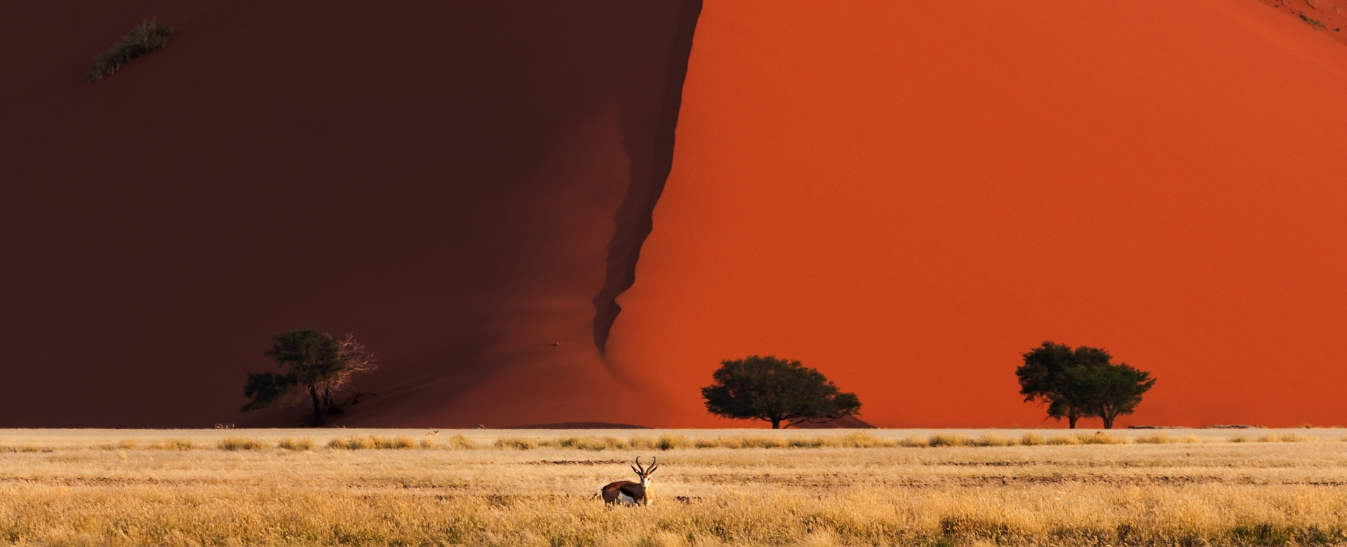 Voyage à pied : Les essentiels de namibie (confort)