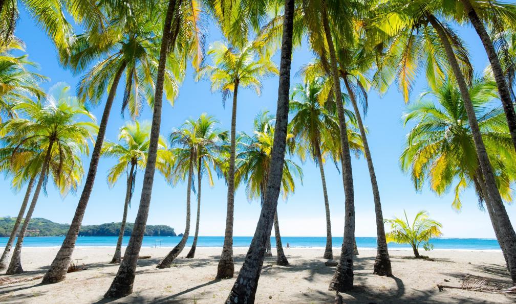 Image Aventure tropicale en liberté