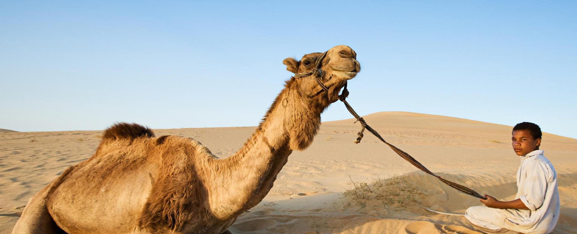 Voyage avec des animaux Maroc : Les petits caravaniers