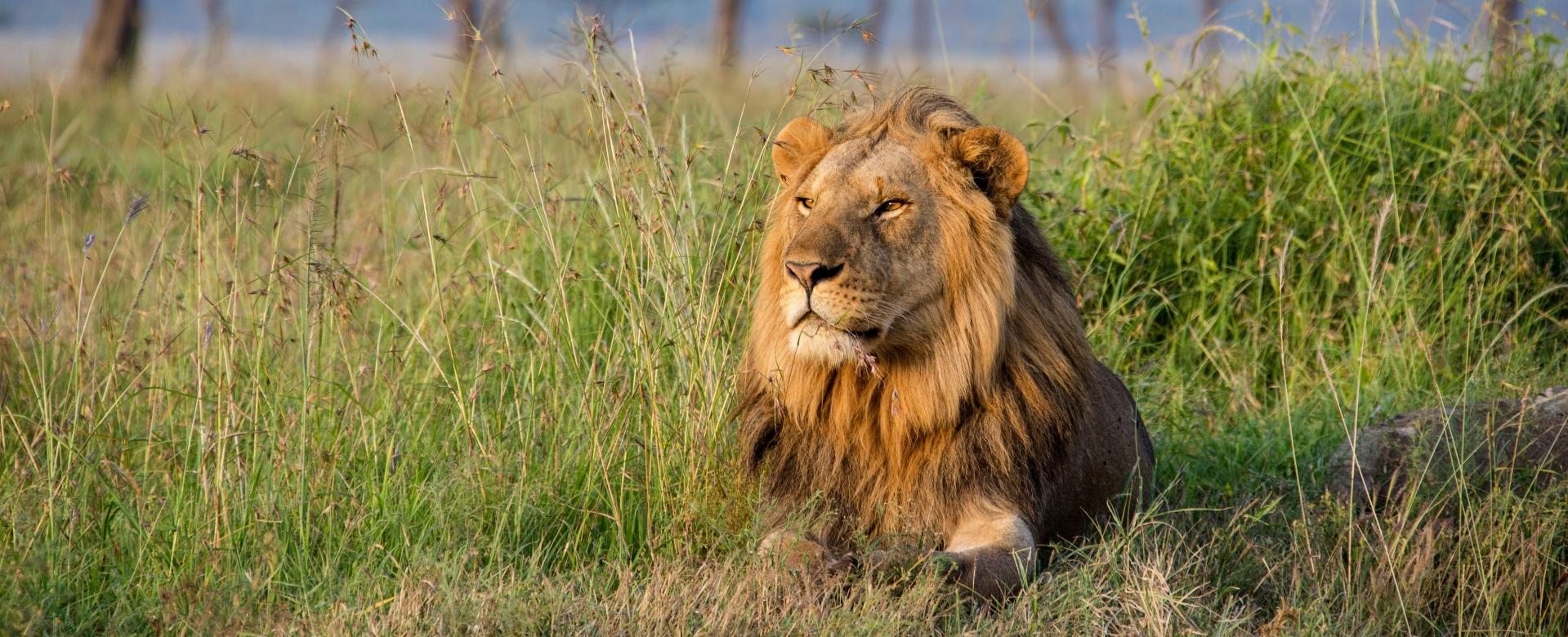 Voyage avec des animaux : Safaris en tanzanie, parcs du nord et lac natron
