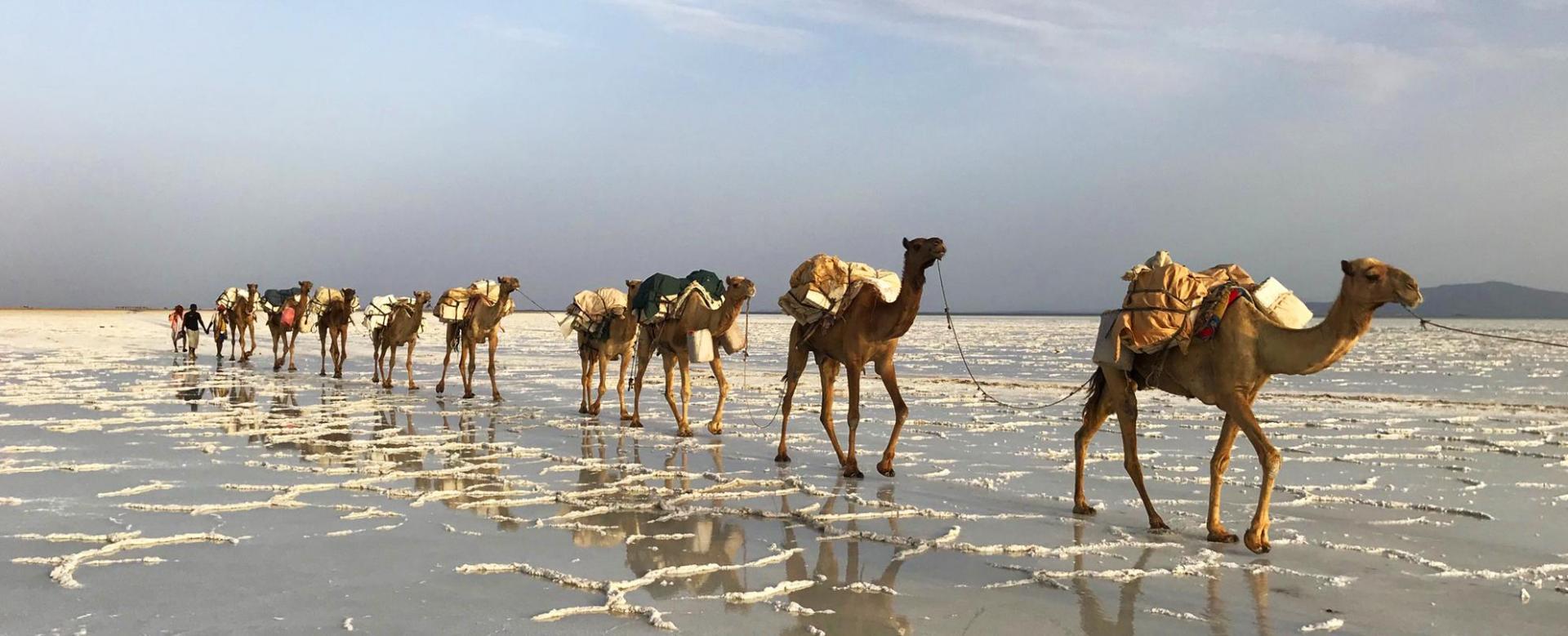 Voyage à pied : Lalibela, dallol et erta ale