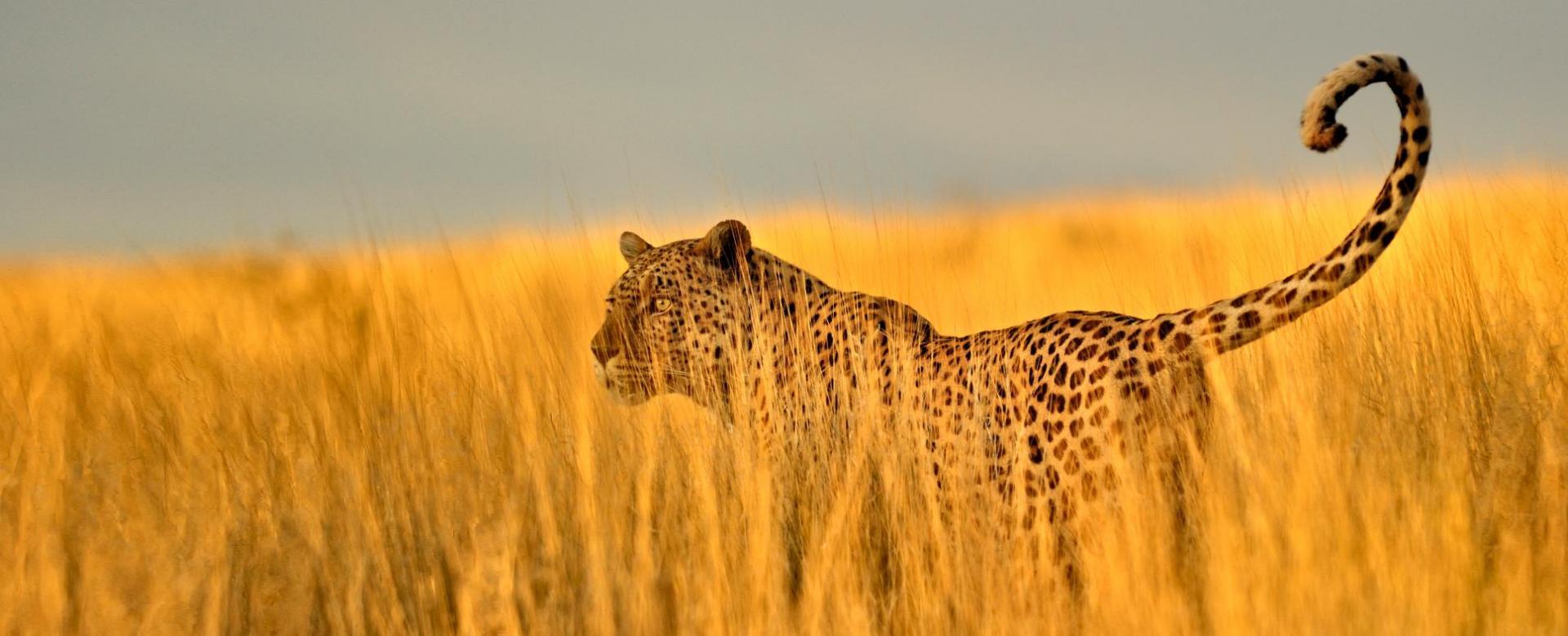 Voyage avec des animaux : Afrique du Sud : Entre savane et tropiques