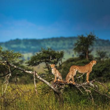 Les grands safaris de Tanzanie en lodge