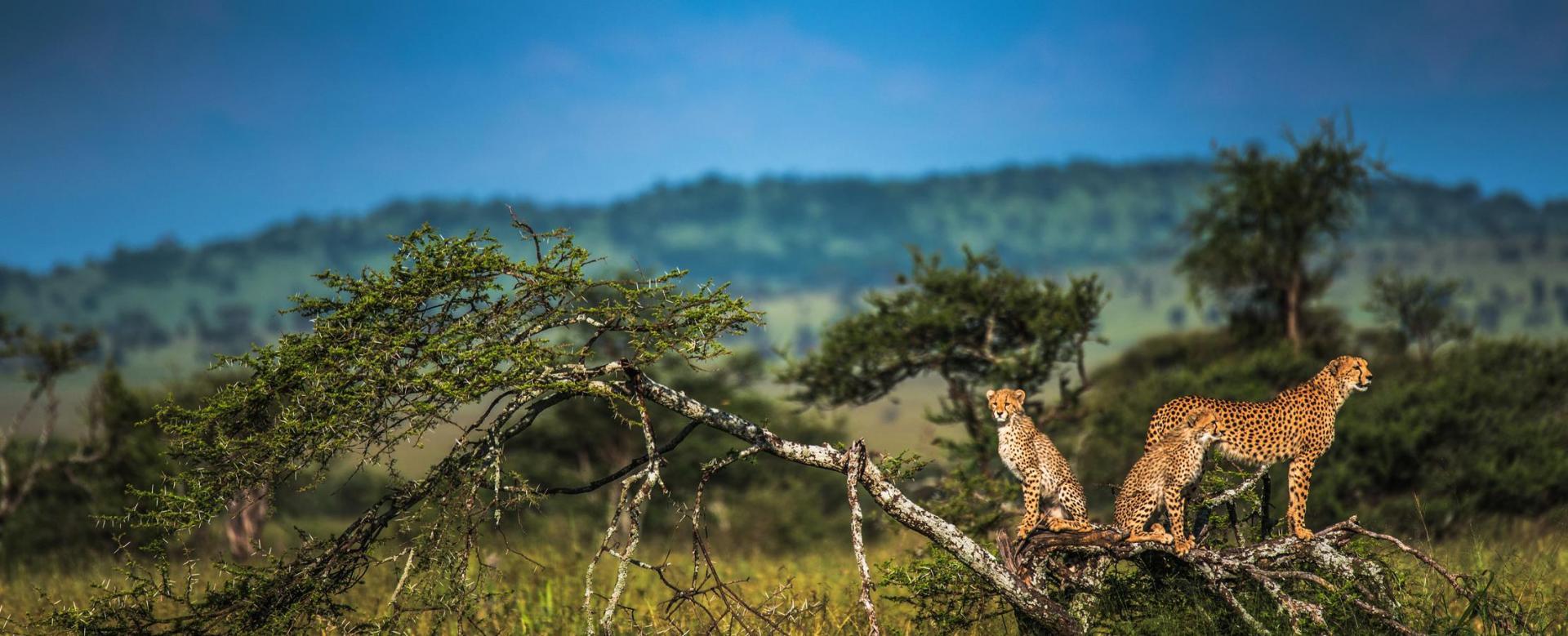 Voyage avec des animaux Tanzanie : Les grands safaris de tanzanie en lodge