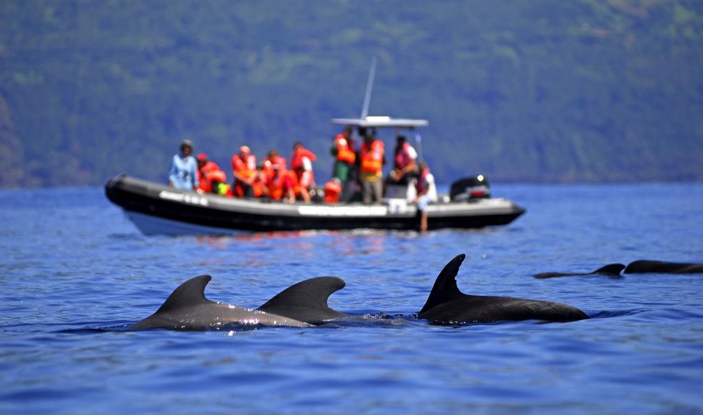 Image Rando, dauphins et baleines