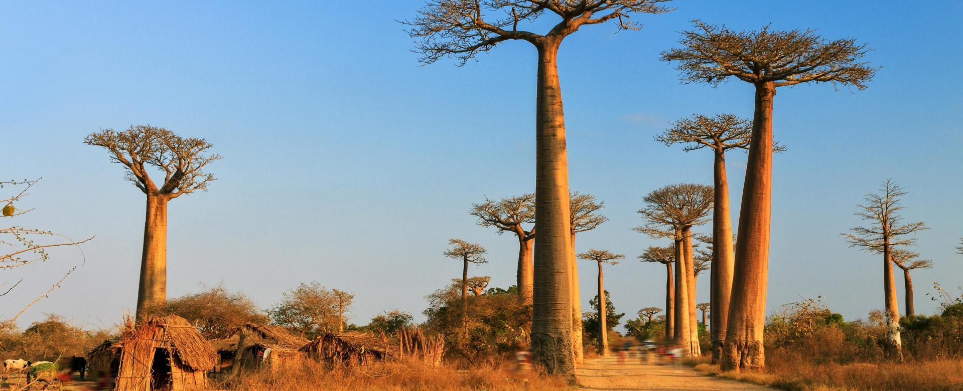 Voyage à pied : Dubai : Au pays des baobabs