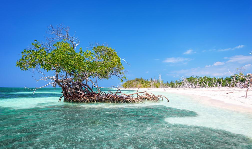 Image La perle des tropiques